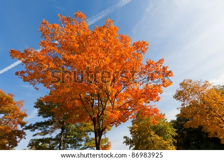 Beautiful Fall scenery in Upstate New York. - stock photo