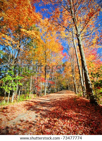 Beautiful fall scenic showing a path trough the trees - stock photo