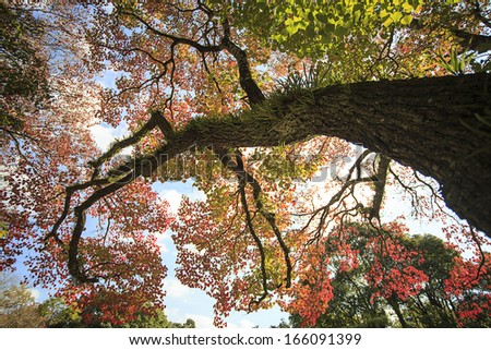 Beautiful fall season - stock photo