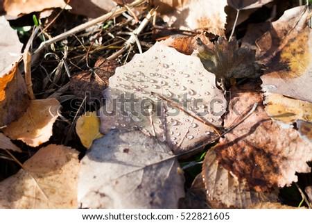 beautiful fallen autumn leaves in the morning dew