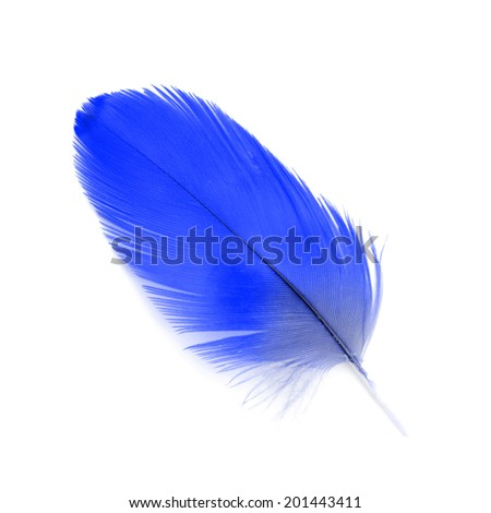 Beautiful feather made from macaw feather isolated on white background.