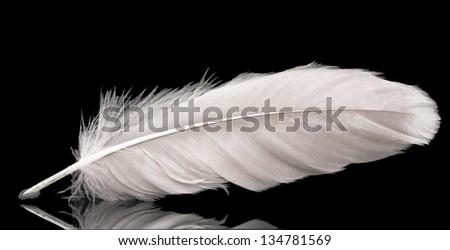 beautiful feather on black background - stock photo