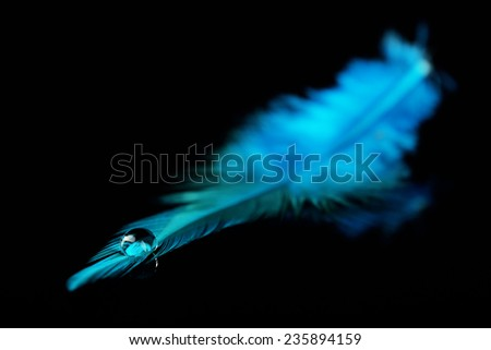 Beautiful feather with water drop on black background - stock photo