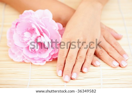 beautiful female hands with pink rose - beauty treatment - stock photo