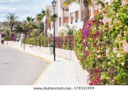 Beautiful fence of multicolored flowers - stock photo
