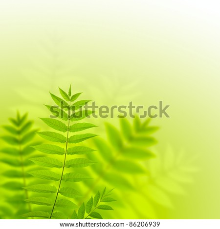 Beautiful fern leaves - stock photo