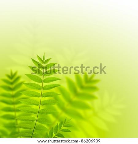 Beautiful fern leaves - stock photo