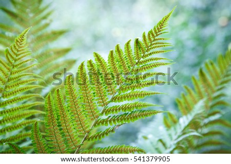 Beautiful fern leaves with spores