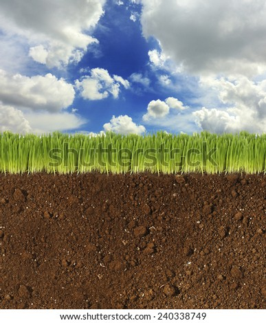 Beautiful field - stock photo