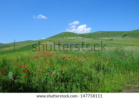 Beautiful field landscape - stock photo