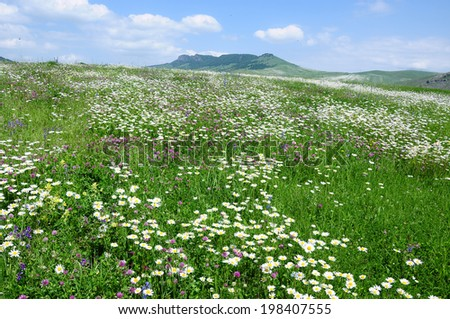 Beautiful field landscape - stock photo