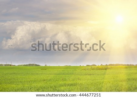 Beautiful field of grass, Overcast sky with clouds and sun. - stock photo