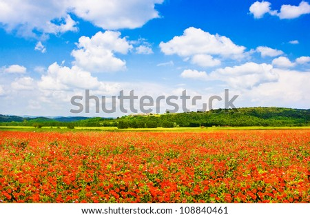 Beautiful field of red poppy flowers with blue sky and the medieval village of Monteriggioni in the background, Tuscany, Italy - stock photo
