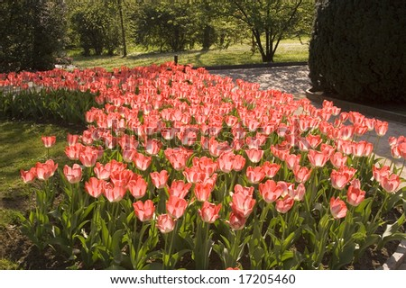 Beautiful field of tulips and grass