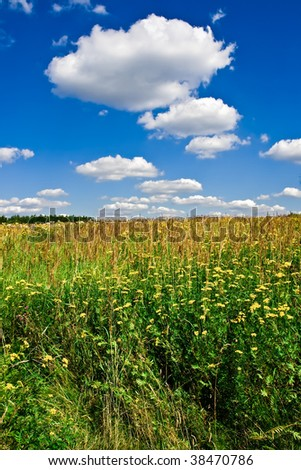 Beautiful field under blue sky