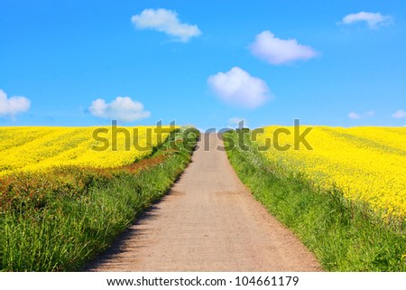 Beautiful fields of rapeseed and a roda in Springtime - stock photo