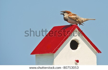 Beautiful finch perched on a birdhouse in Tangier Island. - stock photo