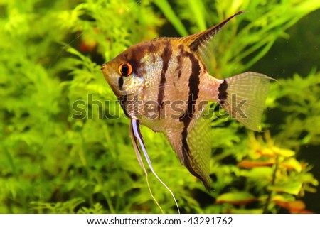 Beautiful fish - stock photo