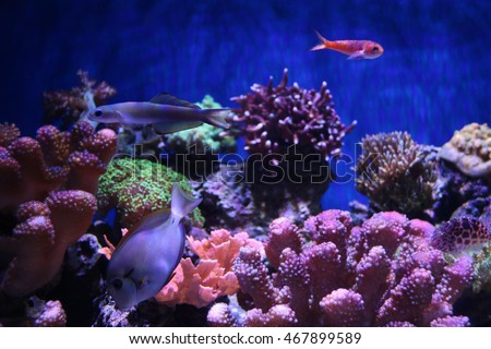 Beautiful Fish and Coral Reef in Aquarium