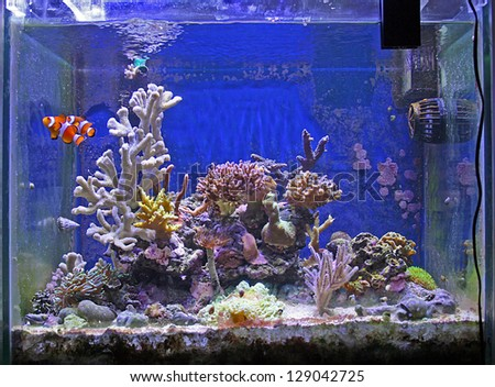 Fish Tank Stock Photos Images Pictures Shutterstock