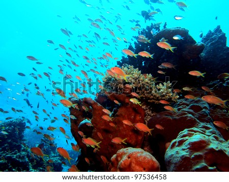 Beautiful fish world - Komodo, Indonesia