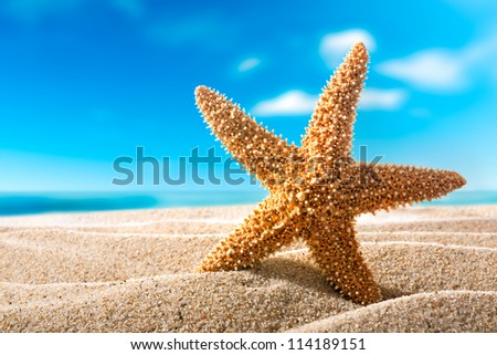 beautiful  fishstar on the sandy beach. Holiday concept - stock photo