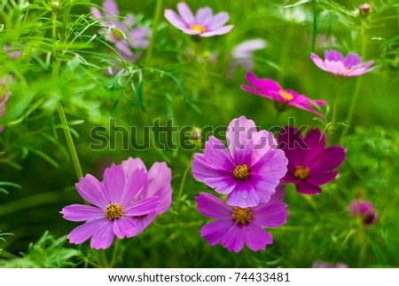 Beautiful Floral - stock photo