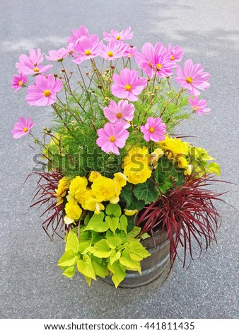 Beautiful floral arrangement with yellow begonias and pink cosmos flowers. - stock photo