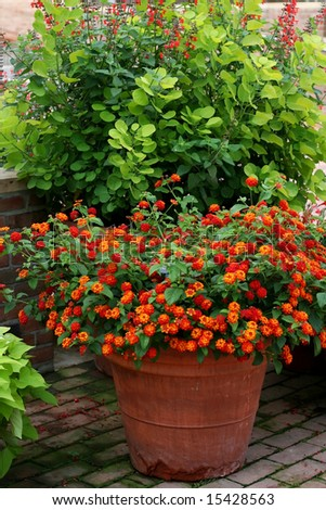 Beautiful floral arrangment - stock photo