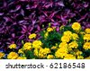 Beautiful floral background - stock photo