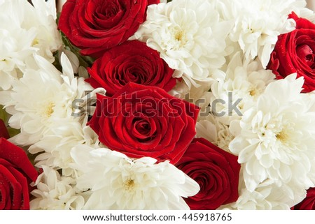 Beautiful floral background made of vivid red roses and delicate white chrysanthemums with wet petals closeup - stock photo