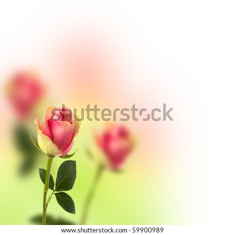 Beautiful floral background. Roses over blurred pink backdrop. - stock photo