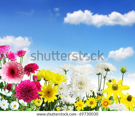 Beautiful Floral Border Flower - stock photo