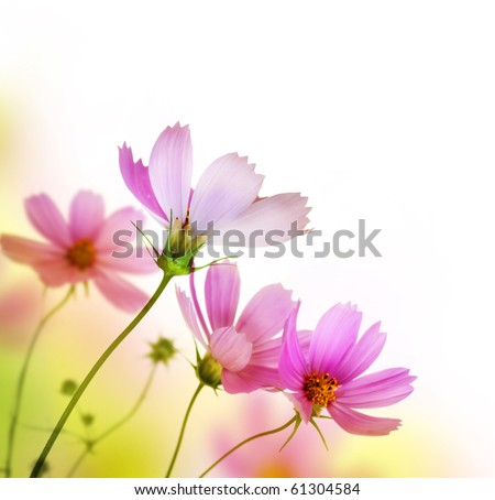 Beautiful Floral Border.Flower design - stock photo
