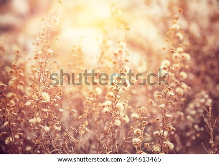 Beautiful floral field in sunny day, grunge style photo, abstract floral background, gorgeous mobile wallpaper, beauty of nature concept  - stock photo