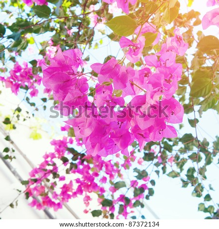Beautiful floral sunny background - stock photo