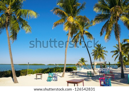 Beautiful Florida Keys along the shoreline with palm trees and beach chairs.