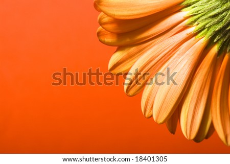 Beautiful flower background, copy space for Your text