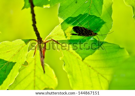 Beautiful flower background with exotic butterflies in Retezat mountains - stock photo
