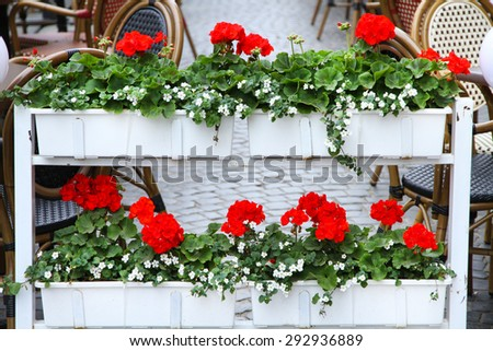 Beautiful flower beds on terrace of cafe - stock photo