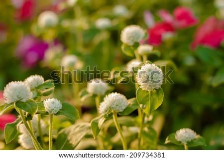 Beautiful flower bud. Shallow dof, selective focus.. - stock photo