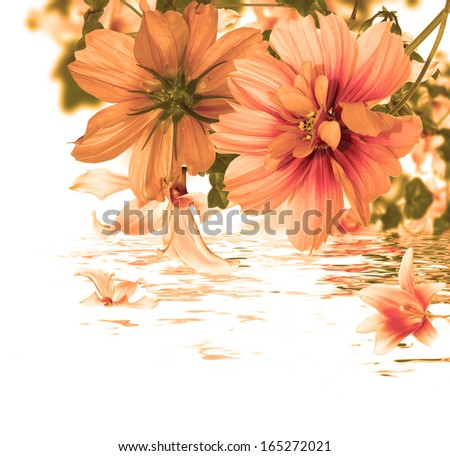 Beautiful flower card.Flora water - stock photo