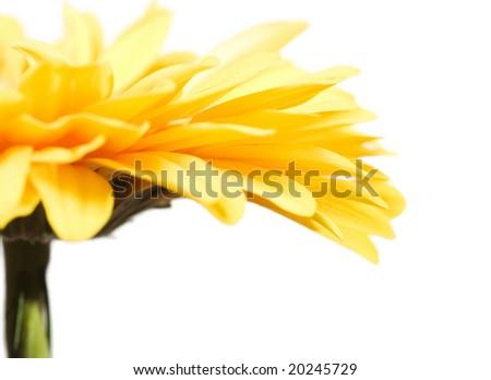 beautiful flower closeup (very shallow DOF) - stock photo