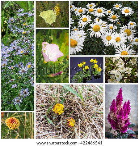 Beautiful flower collage made from nine photographs. - stock photo