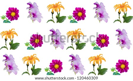 beautiful Flower collection on white background - stock photo