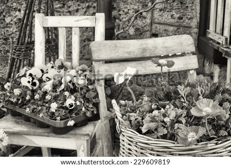 beautiful flower decoration and old chair - stock photo