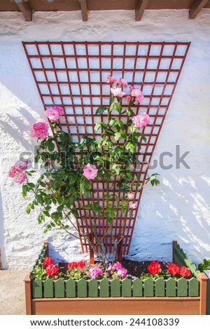 Beautiful flower decoration with pink roses outside a scottish house - stock photo