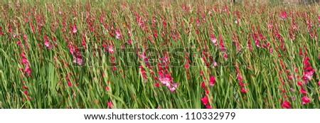 Beautiful flower field - stock photo