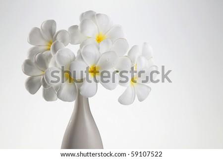 beautiful flower frangipani on the vase - stock photo