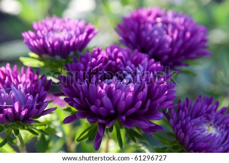 Beautiful flower garden with a blurred background - stock photo